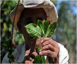 Now Farmers in Peru to Grow Coffee Instead of Coca