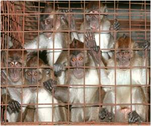 Monkey Exports From Philippines Suspended After 11 Macaque Die Due To Ebola