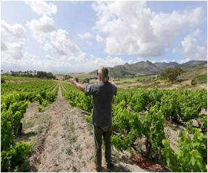 South African Wine Revolution in Swartland