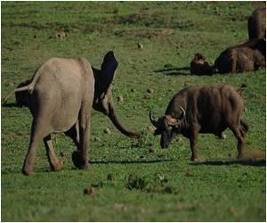 Game Breeders in South Africa Rake in Big Bucks