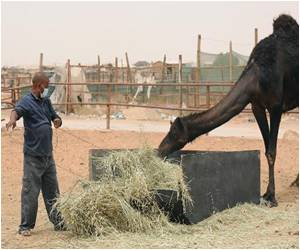 Saudi MERS Toll Hits 160