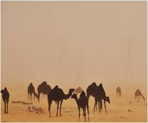 Camels From Saudi Arabia Carry MERS Virus!