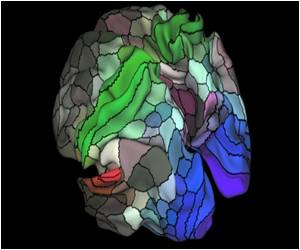 'Most Accurate' Map of the Brain Unveiled, 100 New Regions Discovered