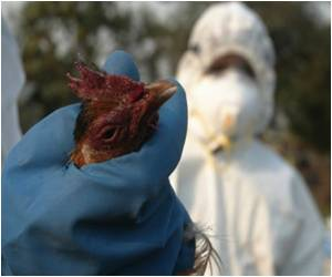 Author Says Mutant Bird Flu Not as Lethal as Thought