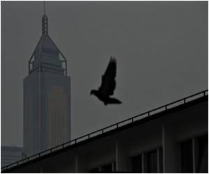Finally, Bird Flu Researchers Agree to 2-Month Halt