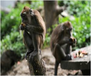 Chinese Scientists Create 'Autistic' Monkeys to Study Autism