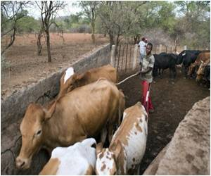 OIE Asks Authorities to Destroy Lab Stocks of Eradicated Cattle Disease