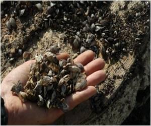 Researchers Unveil Mussels' Grip Secret