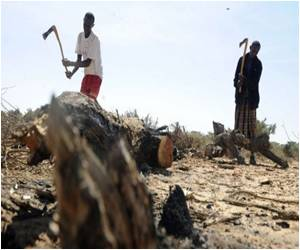 Deforestation may Turn Somalia into Desert