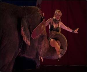 Catalonian Leaders Seek Ban on Animal Circuses