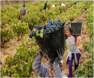 Spain's Wine Surplus Spills Across the World