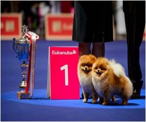 Canine Beauty Pageant Under Way in Switzerland