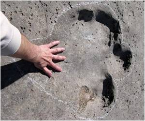 Duck-Billed Dinosaurs' Footprints Discovered in Alaskan Park