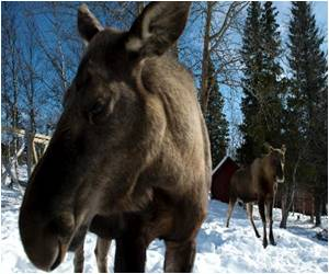 Moose Milk? Yes Please, Says UN Food Agency