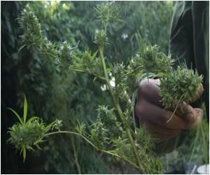 Process of Registering Marijuana Growers Starts in Uruguay