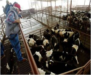 Agriculture Industry Researching New Technologies to Feed Cattle
