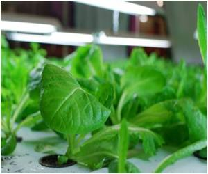 Plant Compounds Help Fight Severe Fungal Infections