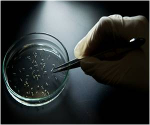 Florida Reports First Three Cases of Zika Virus