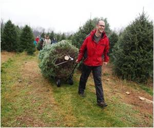 Smaller, Wilder Christmas Trees Appeal to Americans