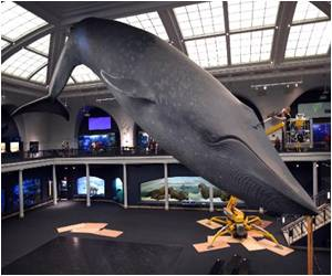 First Adult-only Sleepover Under Blue Whale: New York