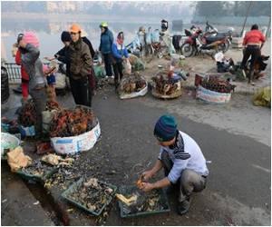 Bird Flu Death Reported in Vietnam
