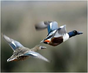 Bird Flu Blamed For Mass Deaths of Wild Ducks in Russia