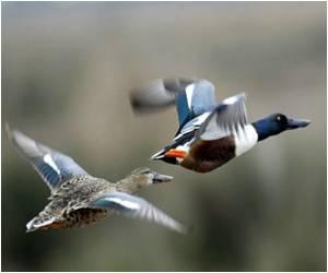 Bird Victims of Cuckoo Evolve Signatures on Their Eggs