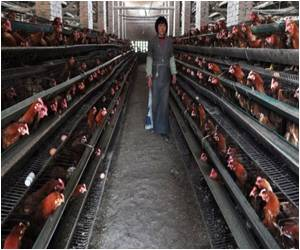 China Bird Flu Fears Played Down By WHO