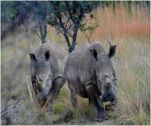 Increase in the Number of Rhinos in Assam's Kaziranga: Forest Department Census