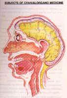 Cranial Organo Medicine