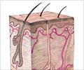 डरमेटॉलजी (त्वचा/चर्म रोग से संबंधित चिकित्सा)