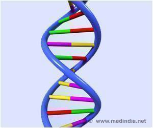 Research Finds DNA Folding Influences Genes Activation