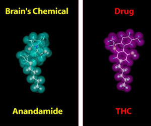 Catalysis Could Aid Drug Development: UWM Researchers