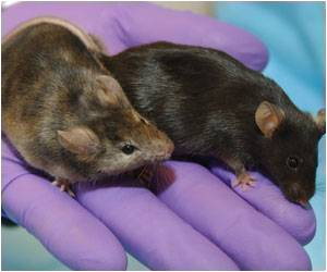 Mouse Model of Noonan Syndrome Created by CNIO Researchers