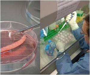 Intestines Grown With Tissue-engineering