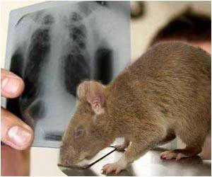 Detecting Tuberculosis: No Microscopes, Just Rats