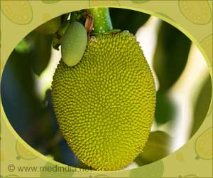 Type 2 Diabetes can be Controlled by Unripen Green Jackfruit Flour