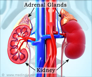 Newly Discovered Treatment Using Molecule Inhibitors May Help Rare Kidney Disease