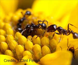 Future Antibiotics Could be Obtained from Ants