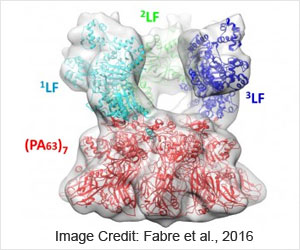 Cryo-electron Microscopy Identifies Lethal Anthrax Protein Complex