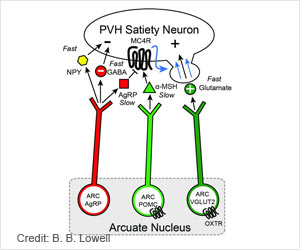 New Subset of Neurons That Controls Hunger Mechanism Identified