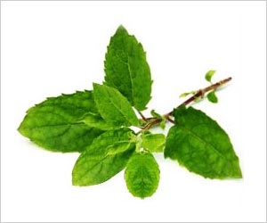 Indian Researchers Successfully Complete Whole Genome Sequencing of Basil (Tulsi)
