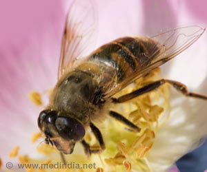 Is the Population Decline in Bees Due To Aluminum-Induced Alzheimer's Disease?