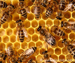 Pesticide Exposure Linked to Smaller Worker Bees