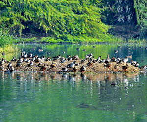 Bird Flu Scare: Sultanpur National Park Shut After 40 Birds Found Dead