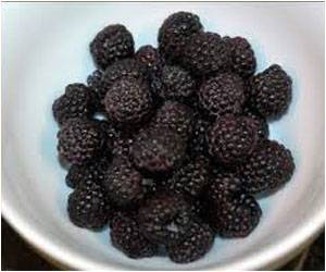 Black Raspberries Highly Effective In Fighting Colon Cancer