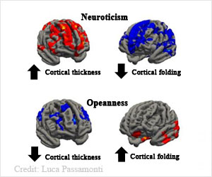 Personality Traits Associated With Area and Thickness of the Brain