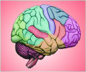 Processing of Sensory Information Improved by Brain Asymmetry