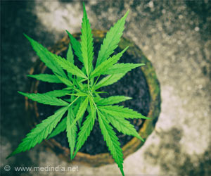 Cannabidiol Aids to Deliver Medications into the Brain