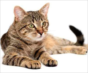 Shelter for Cats with Feline Immunodeficiency Virus Prevents Euthanization